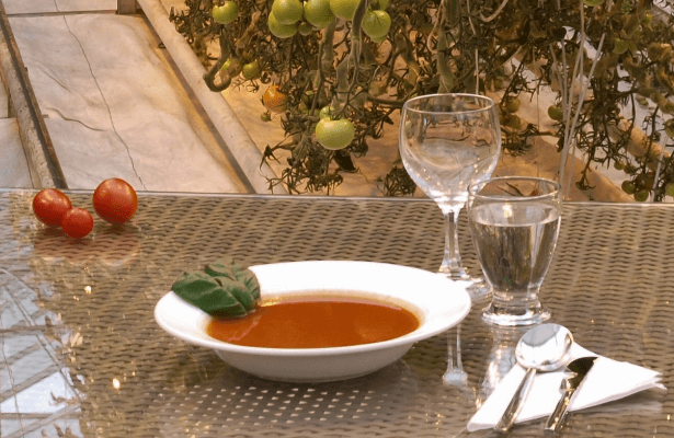 Friðheimar – The Wholesome Golden Circle Restaurant