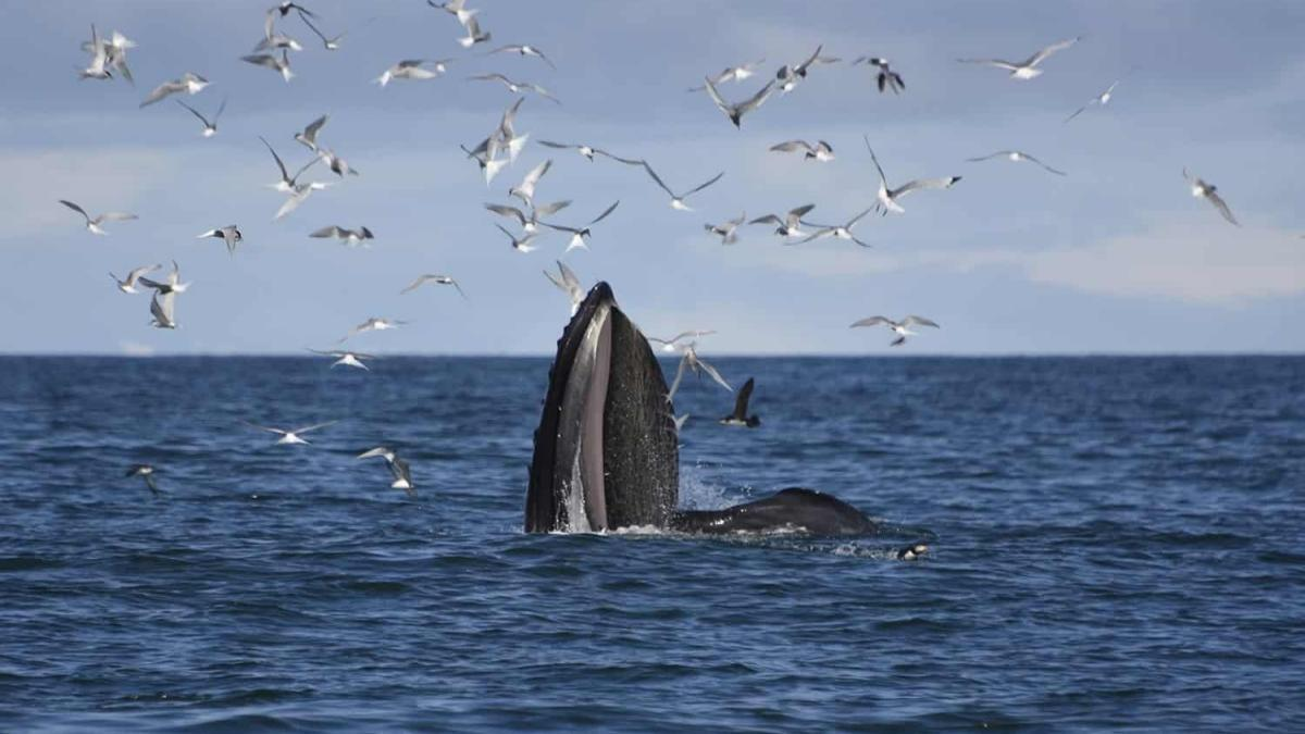 Whale Watching Offer in Iceland Just for You