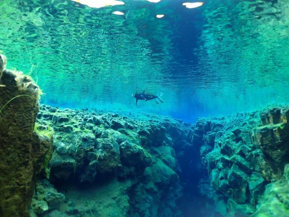 Snorkeling in Silfra is a divine experience.