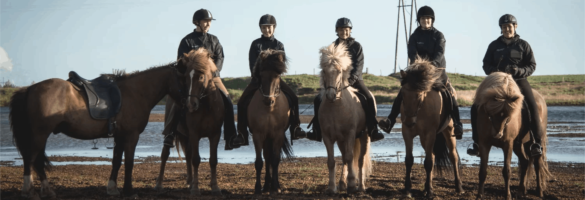 Get 10% off top rated horseback riding in Iceland